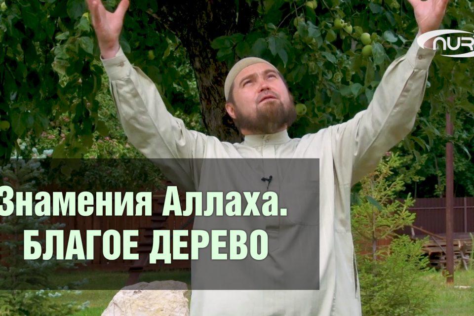 Знамения Аллаха. Благое дерево