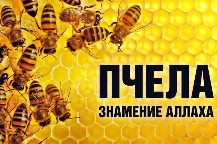 Пчела - знамение Аллаха